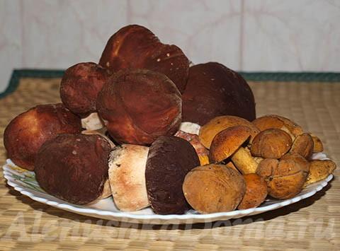грибы на зиму