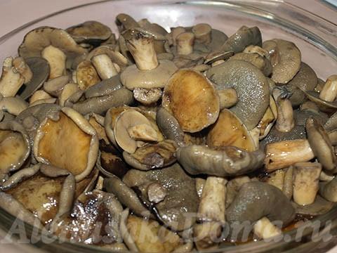 Вареные грибы моховики